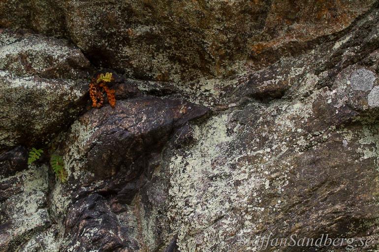 Bergvägg med ormbunkar