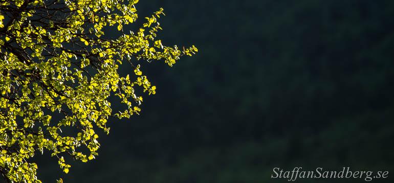 friluftsblogg-langtur-sol-bjork_och_skugga