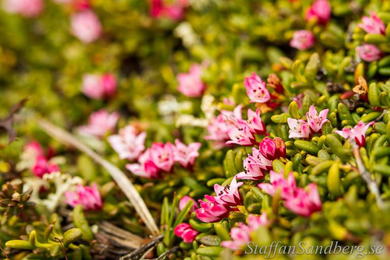 langtur2-blommor