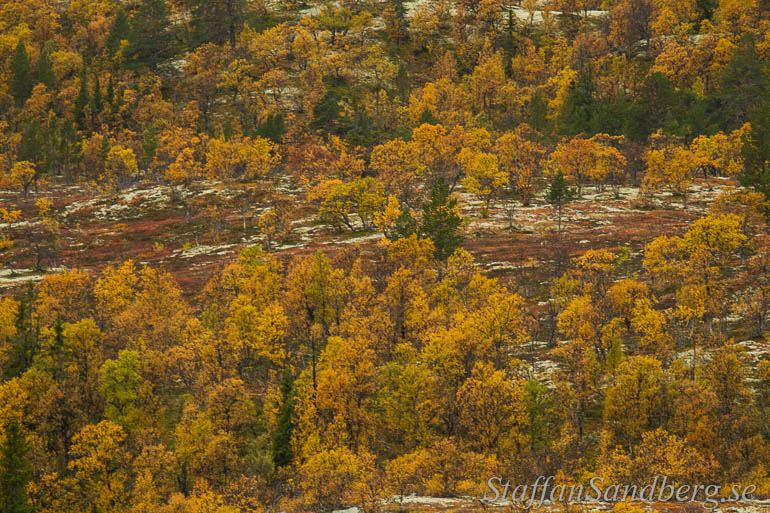 Skog i höstfärger.