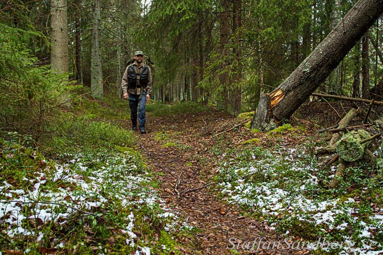 Vandring genom skog.