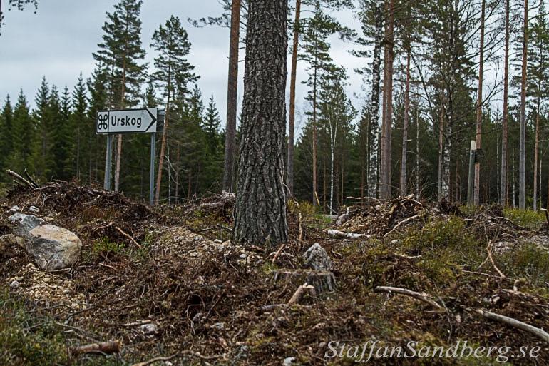 Skylg till urskog