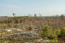 Brandområdet i Tyresta nationalpark.