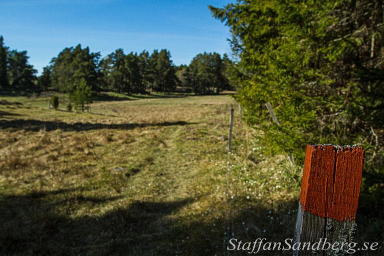 Betesmarker vid Långmaren.