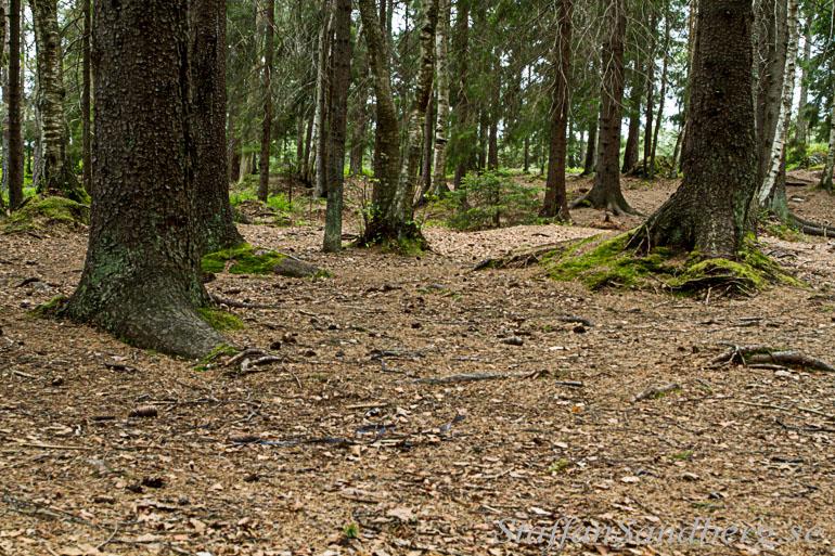 Mark i skogen.