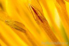 Fotografering av detalj på blomma.