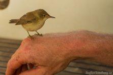Fågel på handebn