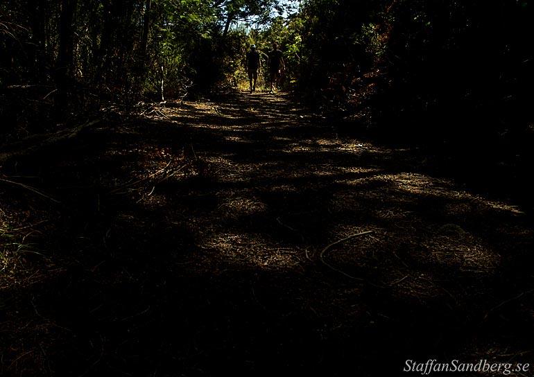 Vandring i skog