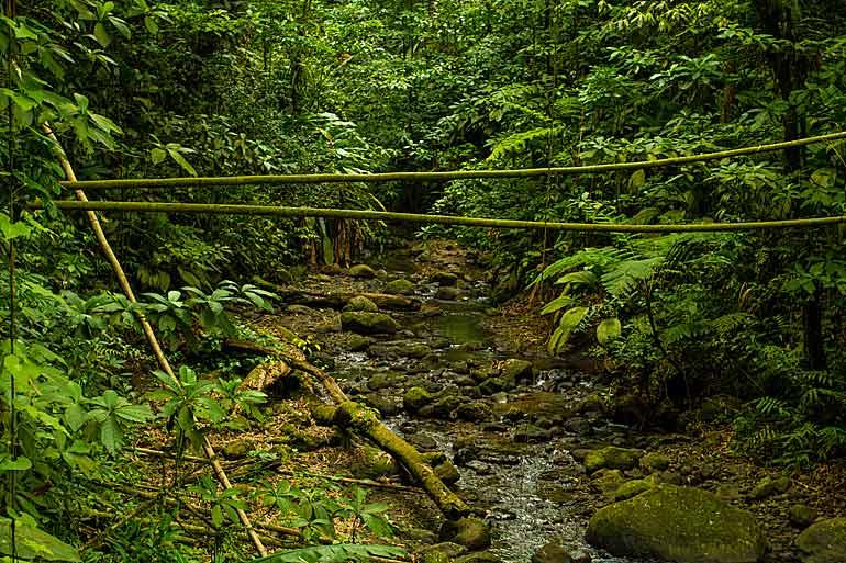 Bäck i regnskog